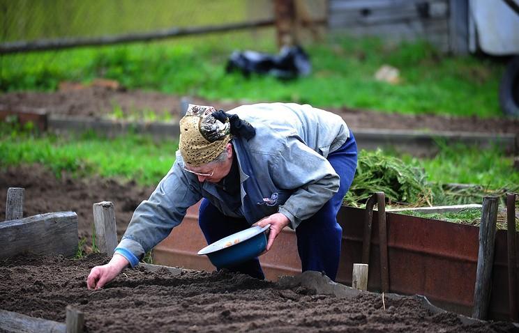 Россельхознадзор опроверг информацию о запрете выращивать овощи и фрукты на даче