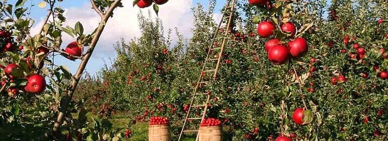 Сельхозпроизводителей лишили возможности отказаться от нулевой ставки