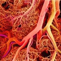 Анализ кала поможет выявить цирроз на ранней стадии