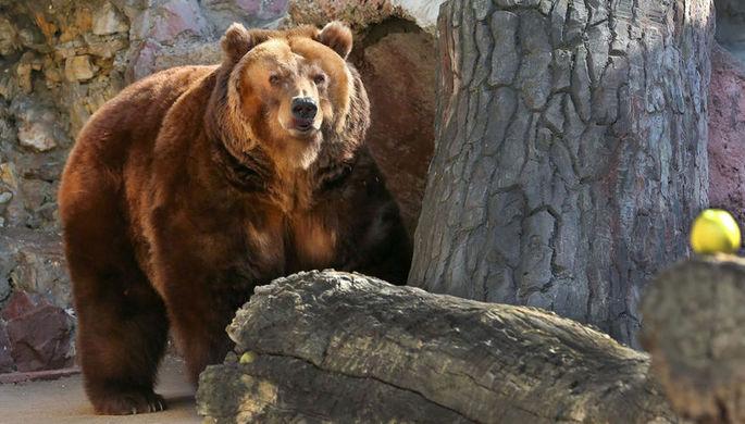 Медведи проснулись в Москве