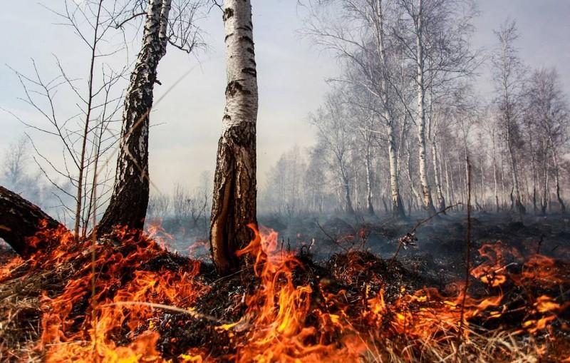 Кабмин выделил 450 млн рублей на жилье для пострадавших при пожарах в Забайкалье