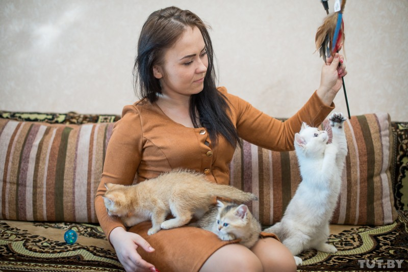 «Просыпаешься ― исразу идешь мыть лотки». Заводчица кошек ― обуходе запитомцами
