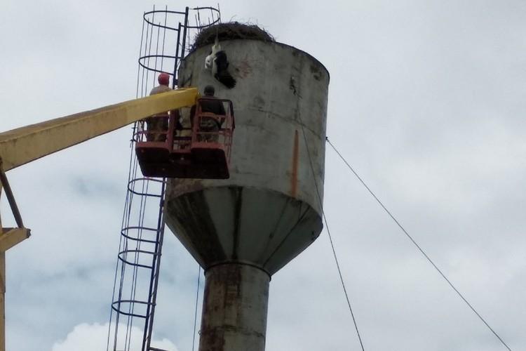 ВГомельской области спасали аиста, повисшего вниз головой наводонапорной башне