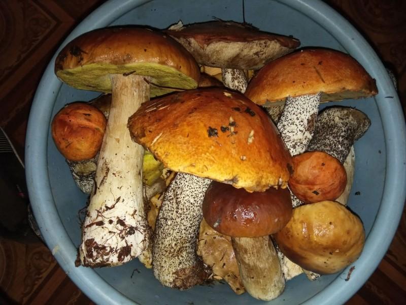 Есть повод для гордости. Посмотрите, какие грибы нашли наши читатели