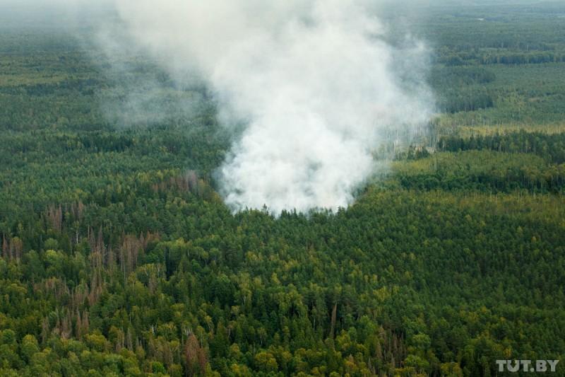 Катастрофа. Сколько животных пострадало отлесных пожаров вСибири