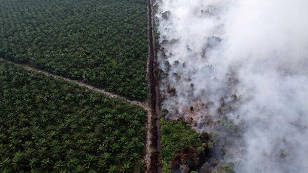 Дым от пожаров в Индонезии достиг территории Малайзии, сообщают СМИ
