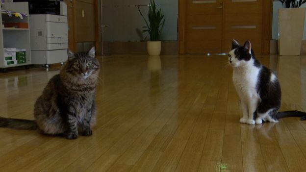 «Может, референдум объявить?» Рига незнает, куда деть котов экс-мэра Ушакова