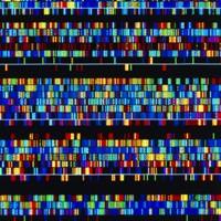 Ученые создали 3D-карту генома сетчатки мыши