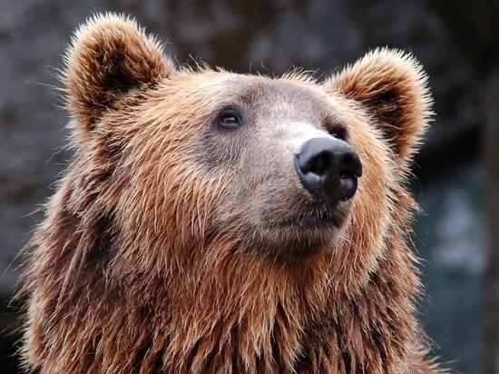 Медведь задрал экс-депутата Якутии, убившего его товарища