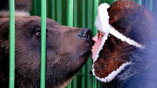 Назван способ пережить встречу с медведем