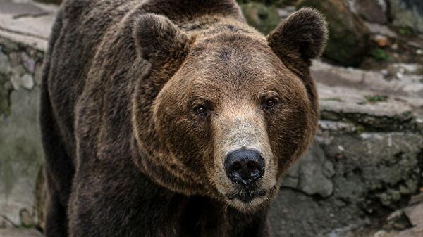 В Чите медведь забрался на торговую базу
