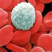 Раскрыт механизм защиты лимфоцитов от токсинов