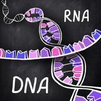 Специалисты изучили структуру фермента, связанного с раком
