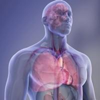 Трансплантация сердца от донора с гепатитом С признана безопасной